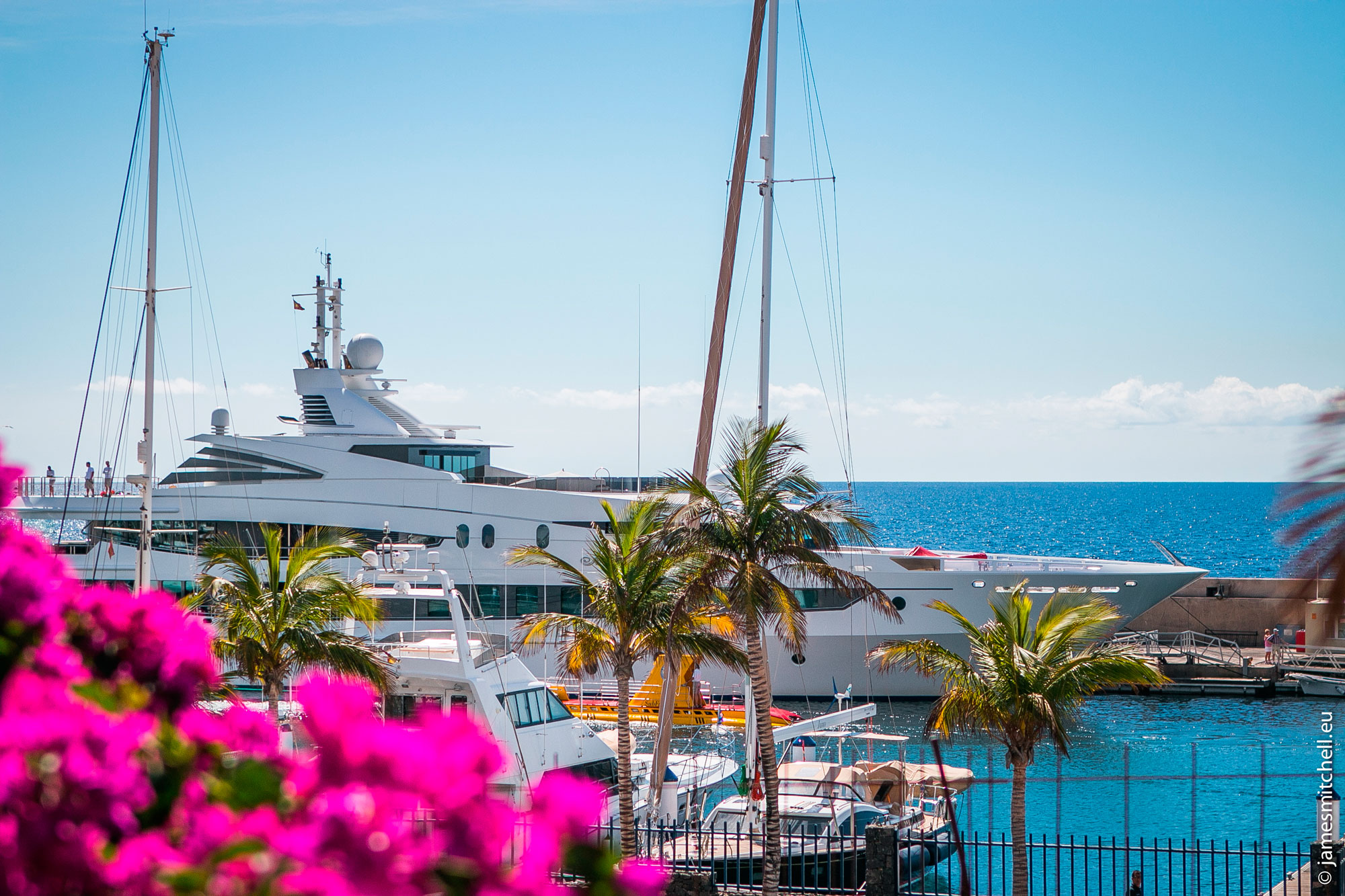White yacht pulling out of the marina with beautiful native pink flowers and palm trees in the foreground.