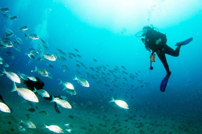 Scuba divers near a large school of small silver striped fish.