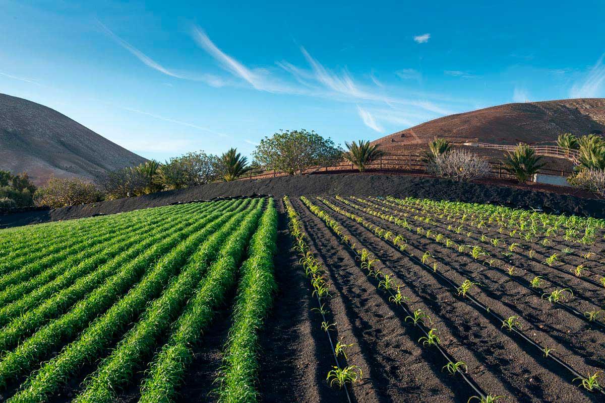 Green plants growing in fields at Finca de Uga