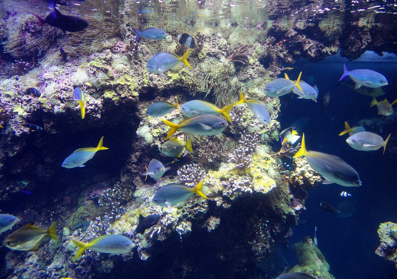 Bright blue and yellow fish near reef.